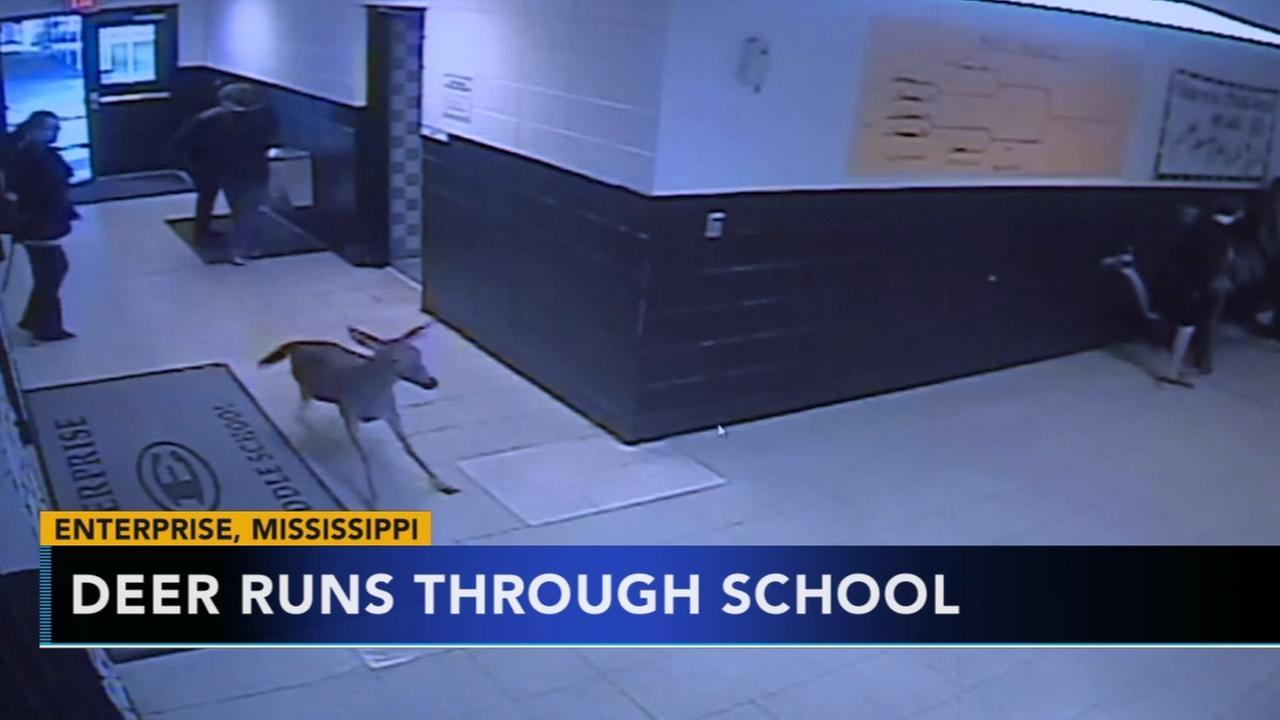 Deer slides through Mississippi school