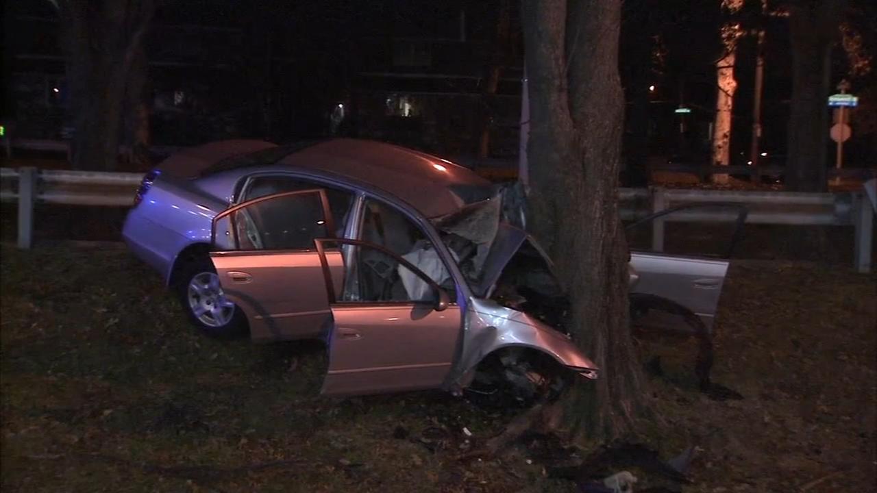 Car crashes into tree on Roosevelt Boulevard