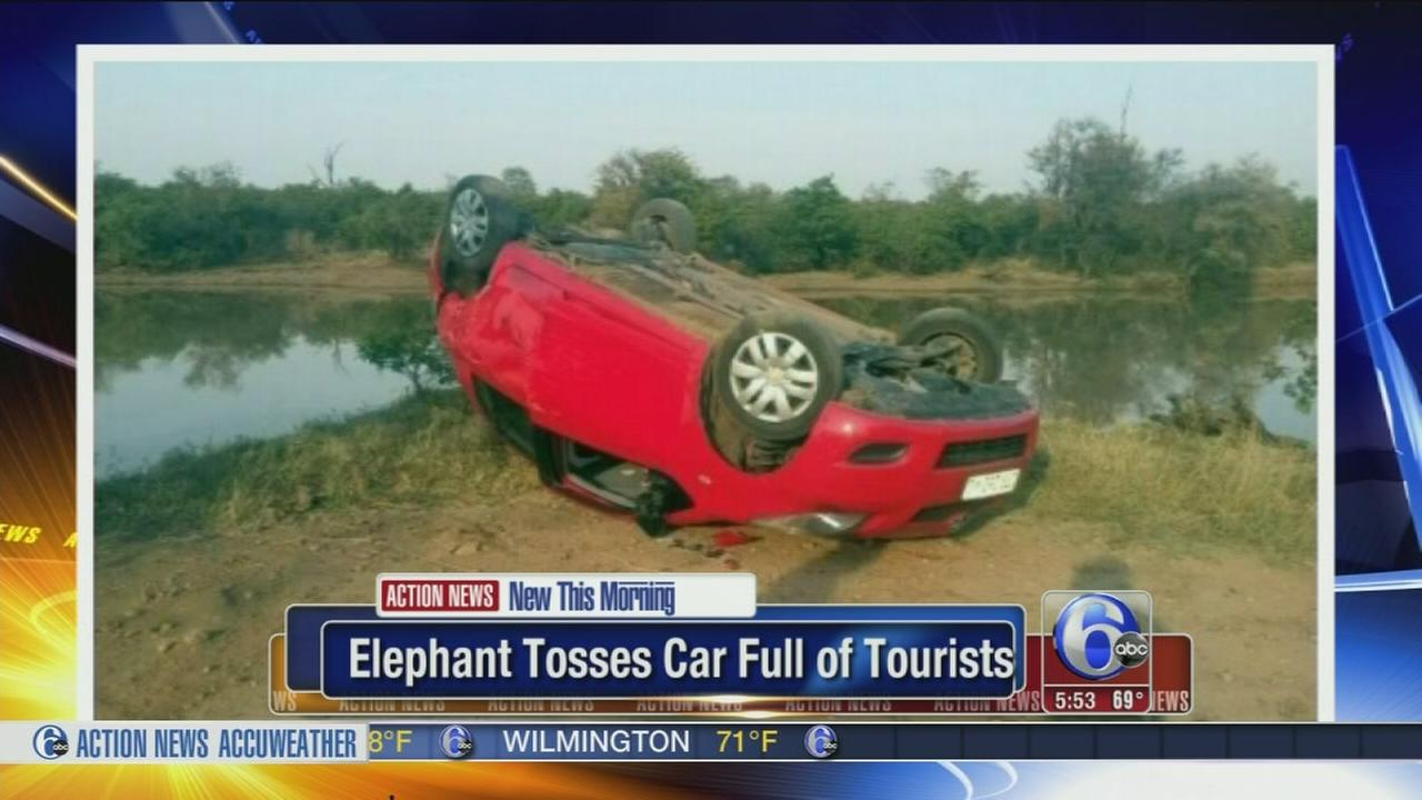 VIDEO: Elephant tosses car full of tourists