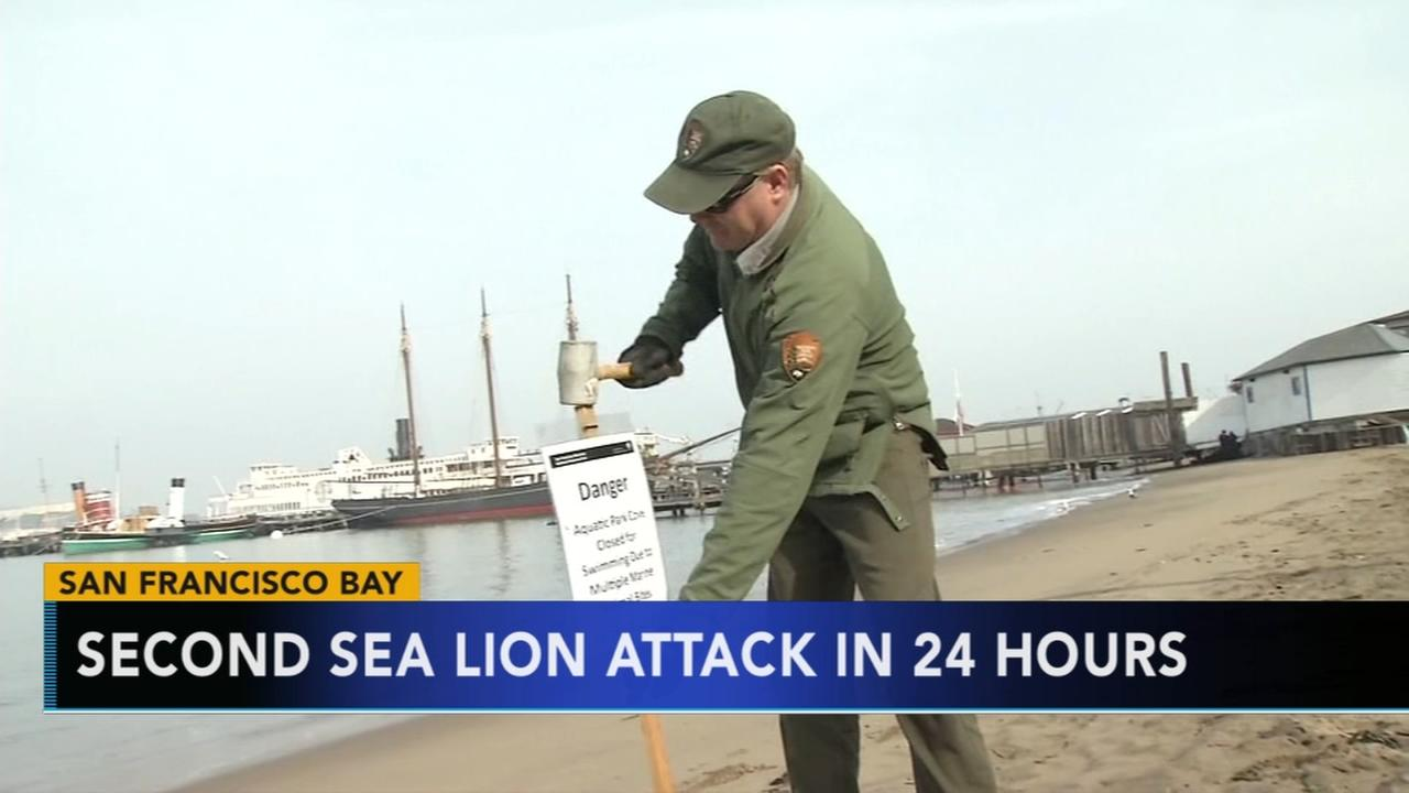 Second sea lion attack in 24 hours