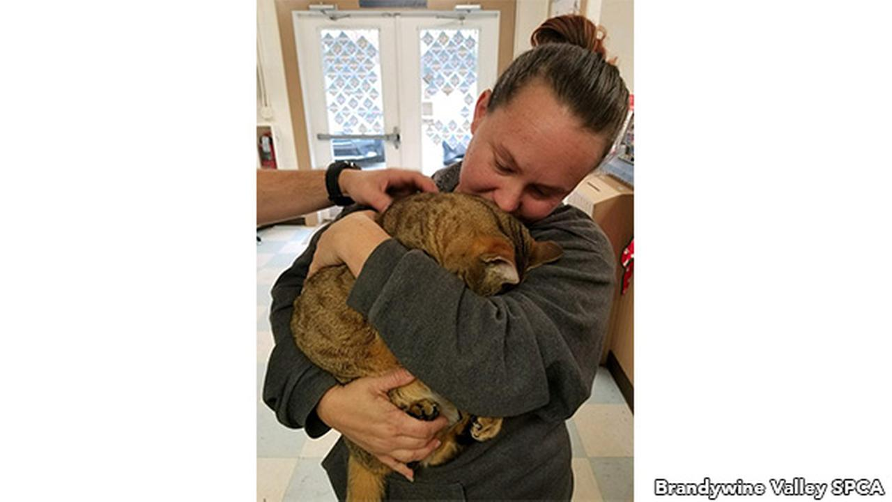 Raja the cat returns to Delaware family 3 years later