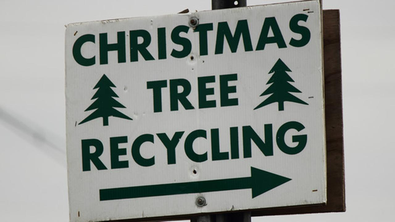 Christmas Tree Recycling Program in Philadelphia