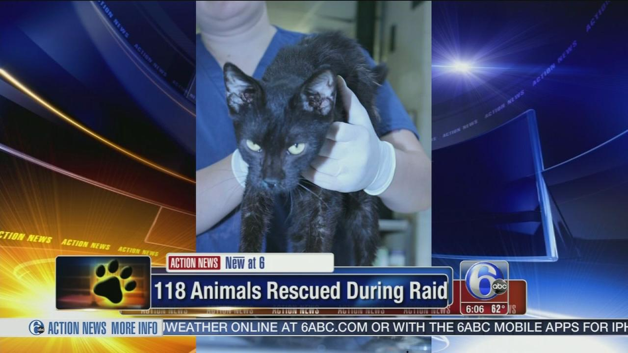 VIDEO: 118 animals rescued during raid n Lehigh Valley