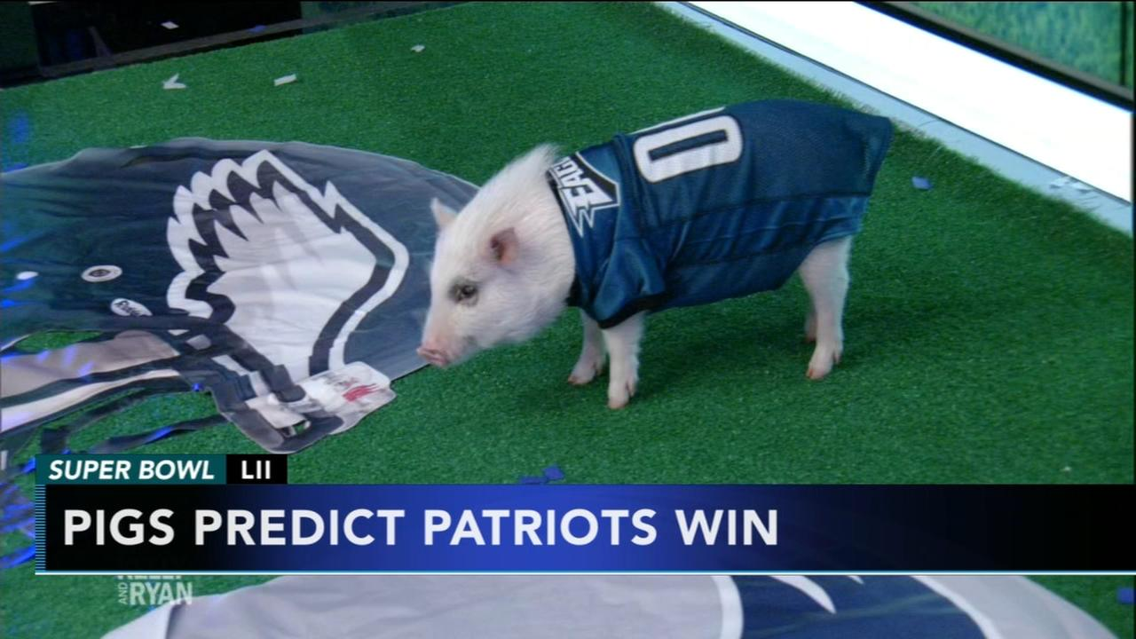 Pigs predict Patriots win on LIVE with Kelly and Ryan