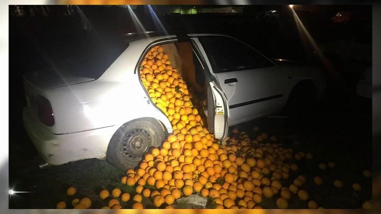 Great orange heist in Spain
