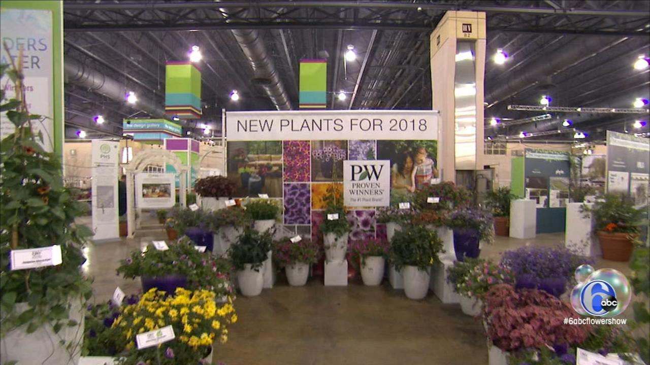 Flower Show: New and old