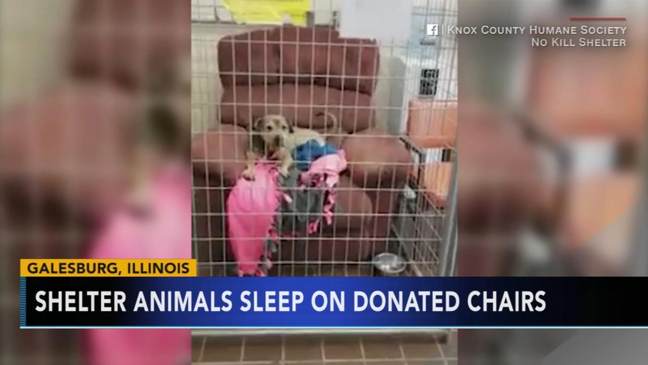Illinois shelter animals curl up on donated chairs