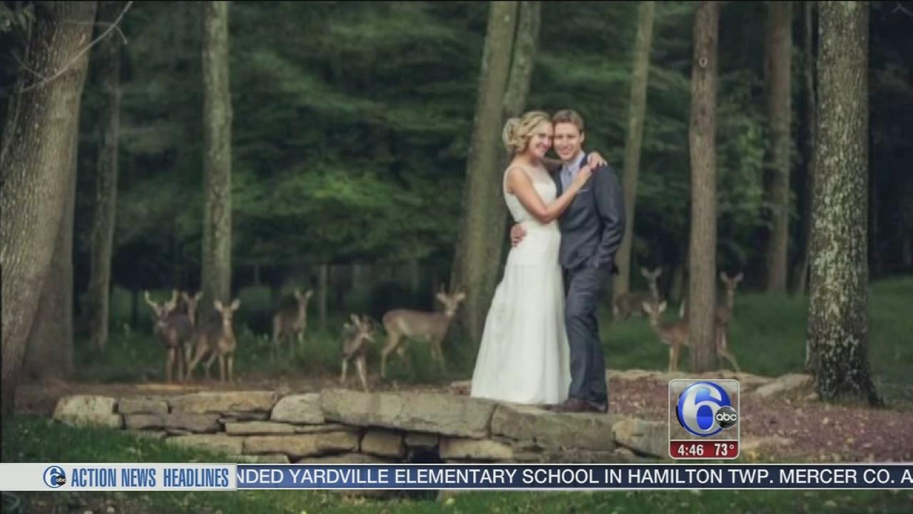 VIDEO: Deer herd crashes wedding in New Jersey