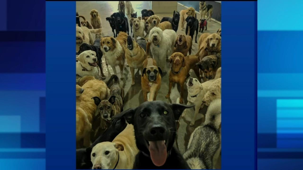 Dog daycare selfie going viral