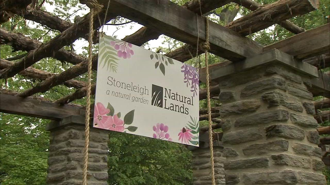 Stoneleigh garden threatened by school plan