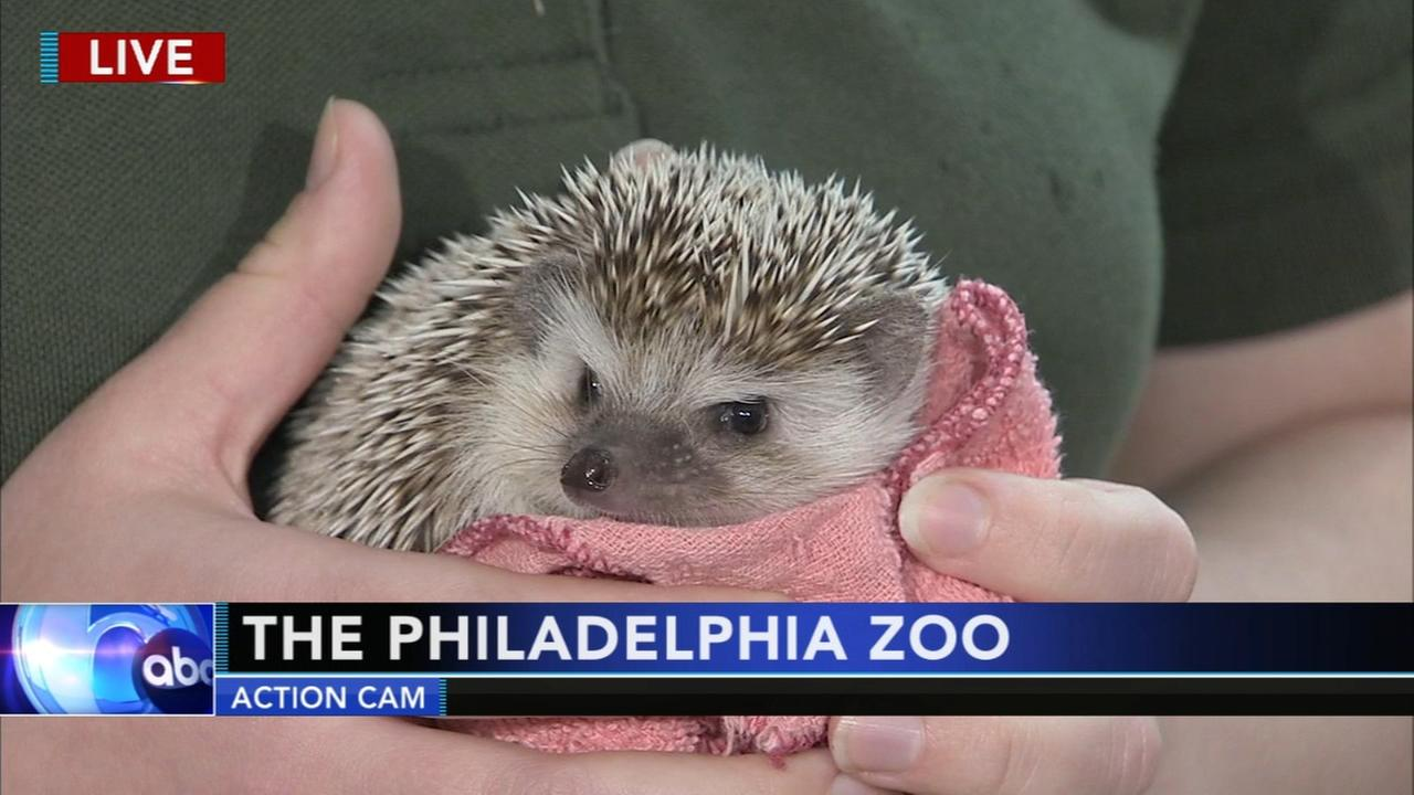 Cecily Tynan with Zoo Weather