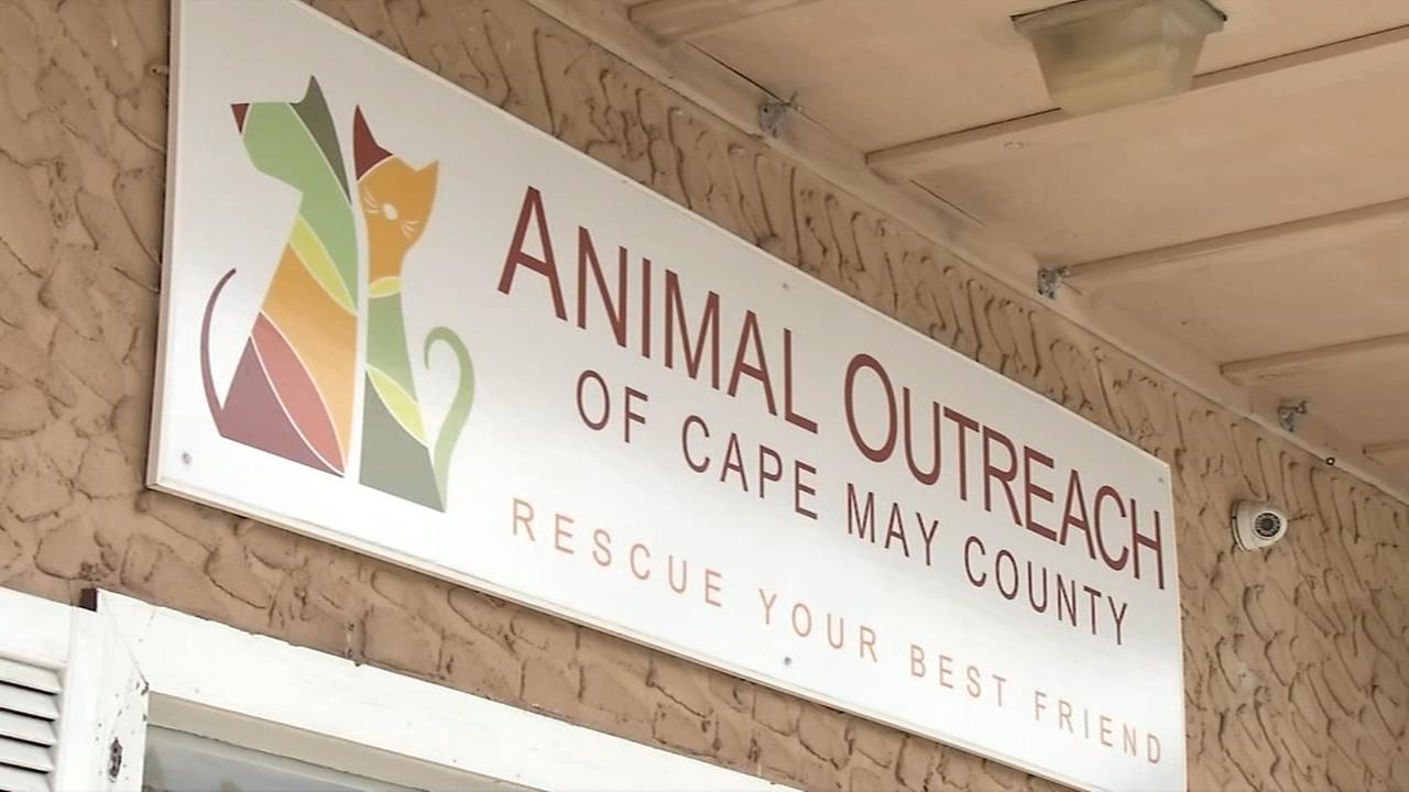Shelter Me: Animal Outreach of Cape May Co.