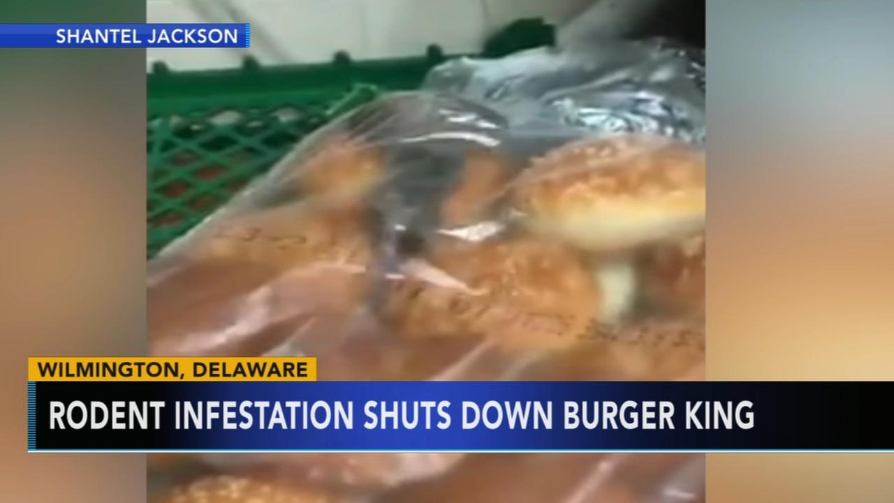 Rodent infestation shuts down Burger King