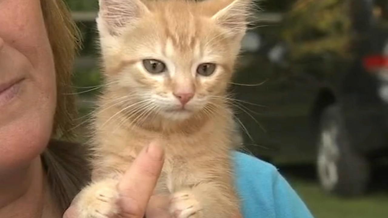 Lucky kitten survives harrowing ordeal