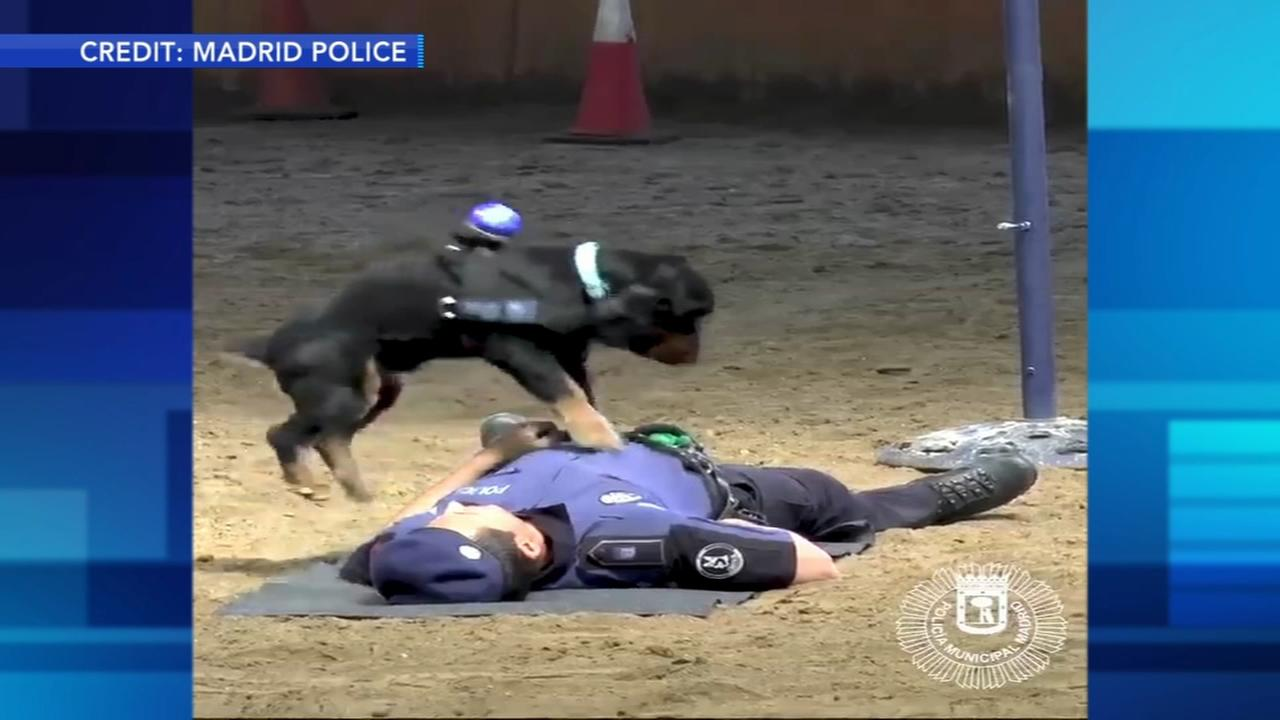 Dog performs CPR