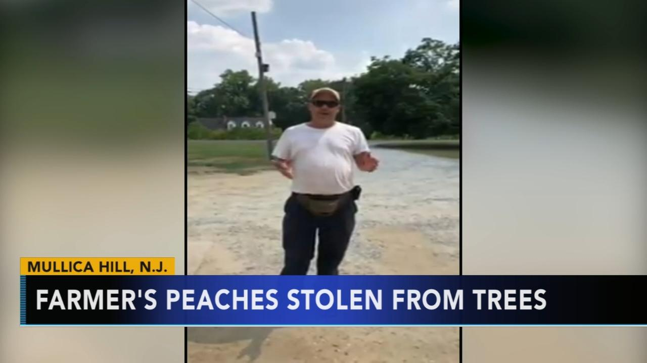 N.J. farmers peaches stolen from trees