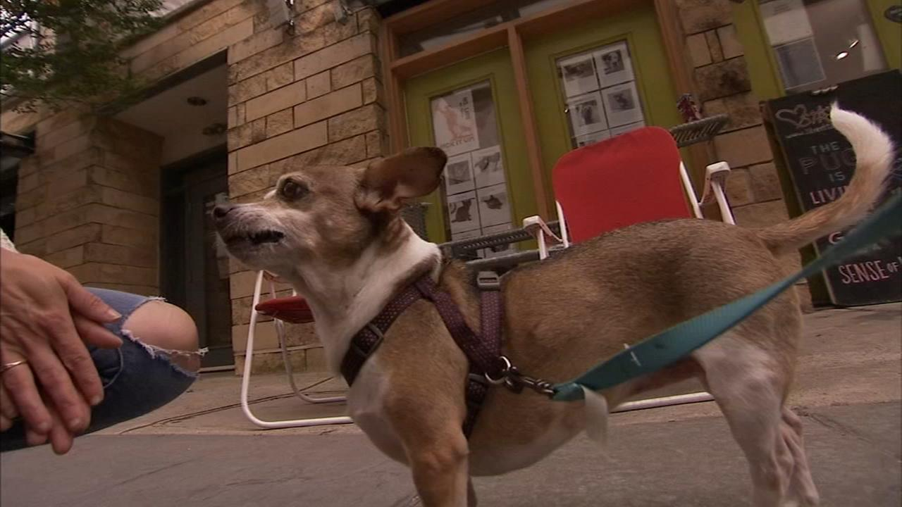 Shelter Me: Street Tails Animal Rescue