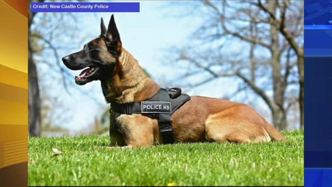 K-9 helps find boy with autism