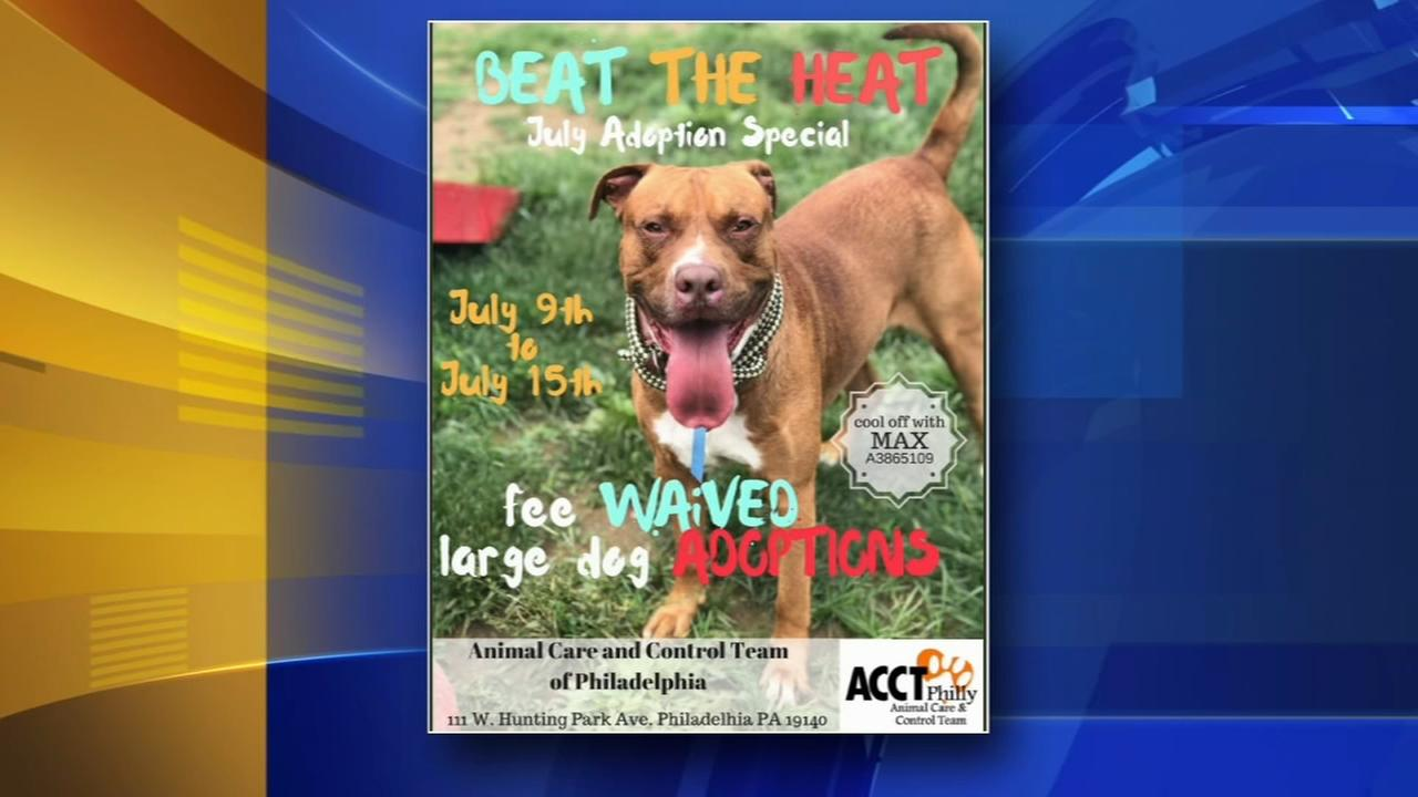 ACCT waives pet adoption fees this week