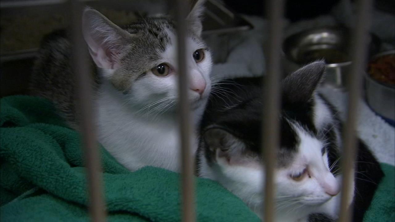 Shelter Me: Camden County Animal Shelter