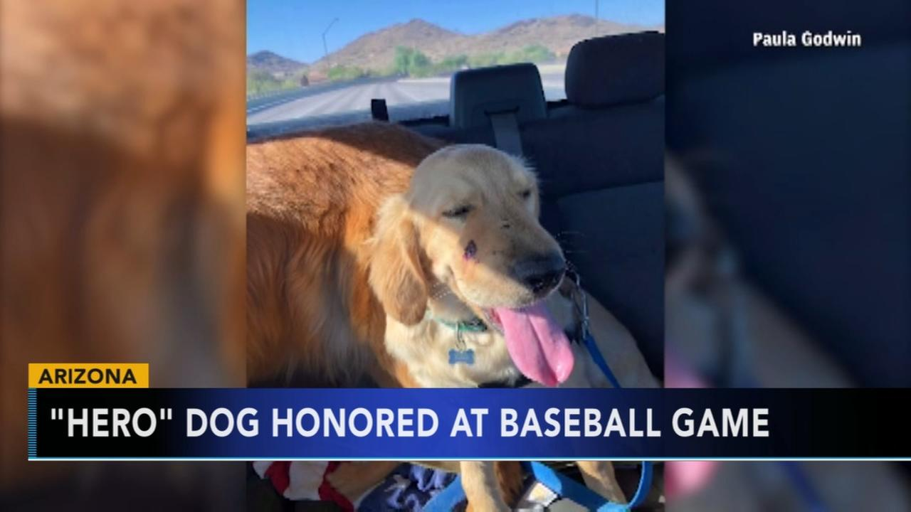 Dog who saved owner from rattlesnakes bite honored at Diamondbacks game