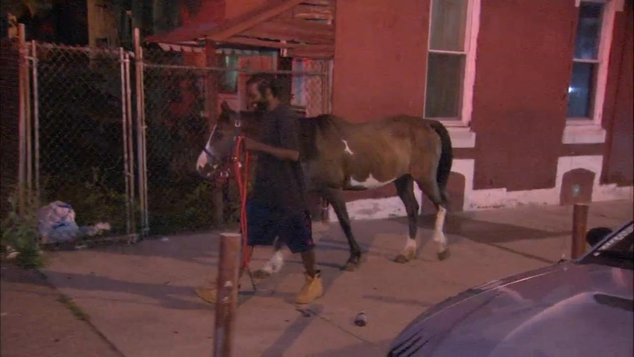 Fire displaces horses in North Philadelphia
