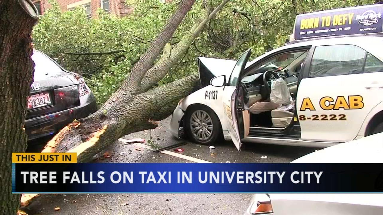 Tree falls on taxi in University City