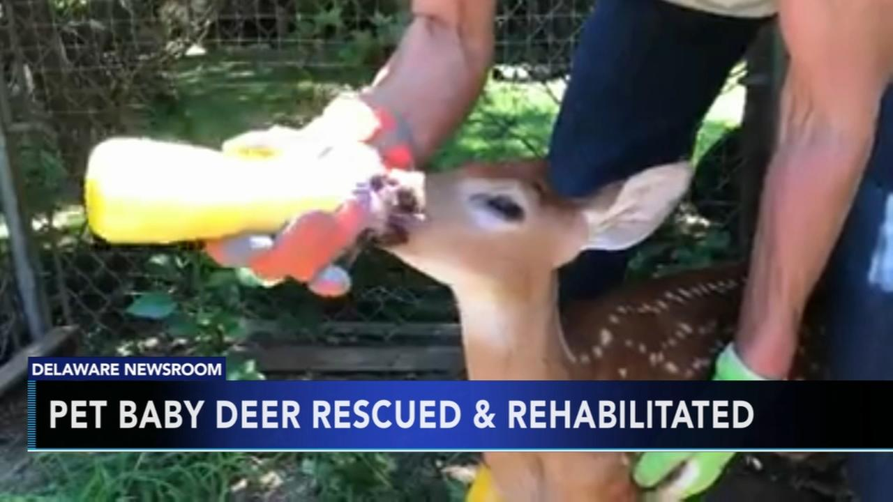 Keeping a deer as a pet illegal in Delaware