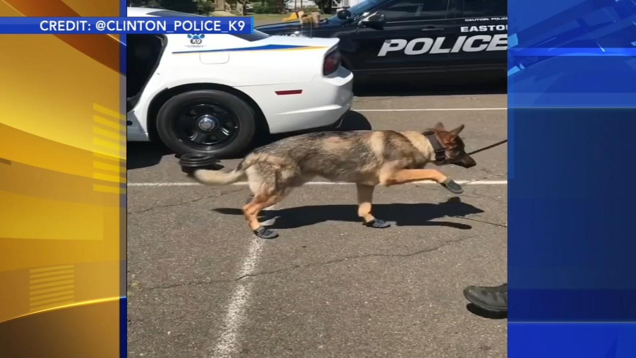 Police K-9 gets used to new booties