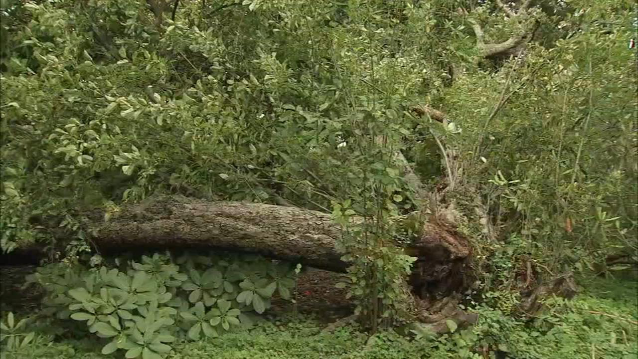 Live wires fall on a tree at a Devon home