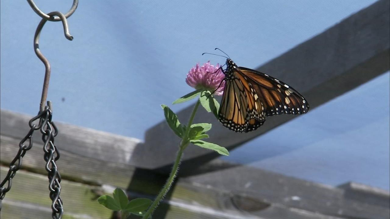 Art of Aging: Couple transforms yard into butterfly garden