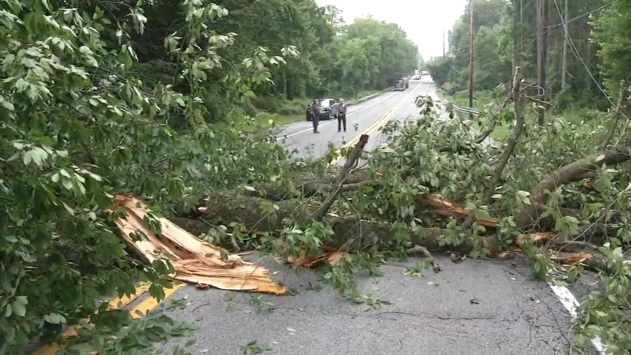 Tree knocks down wires, damages SUV