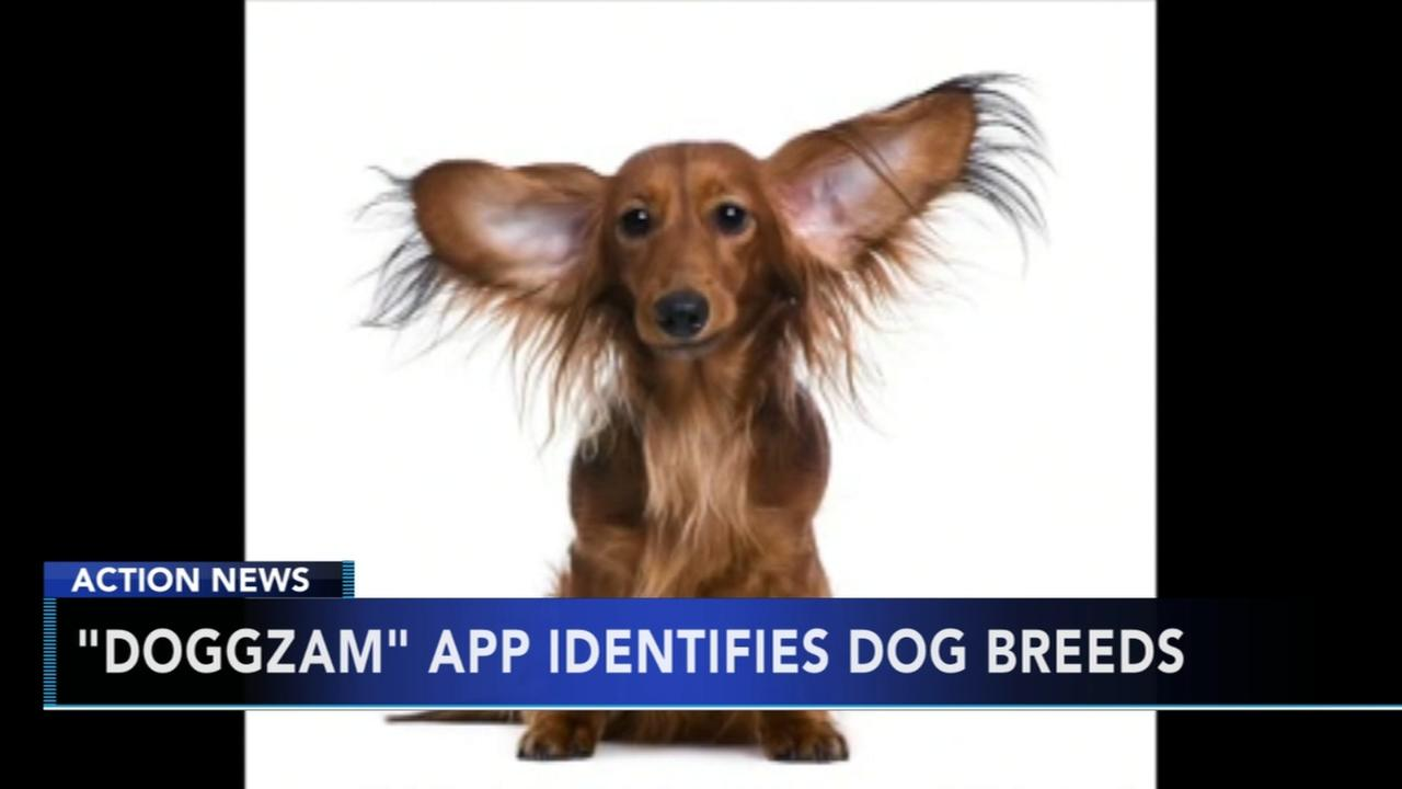 Dog recognition app helps identify dog breeds