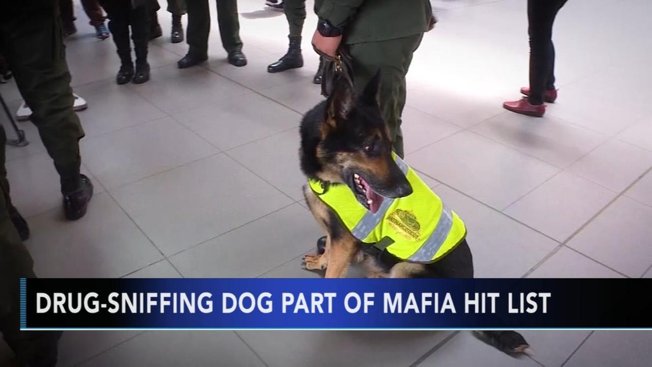Colombian gang puts $70k bounty on drug-sniffing dog