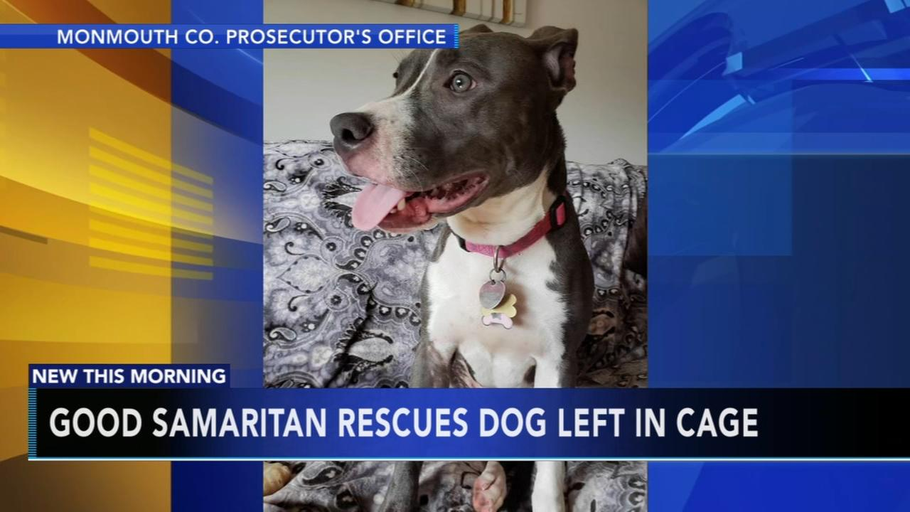 Good Samaritan rescues dog left in cage