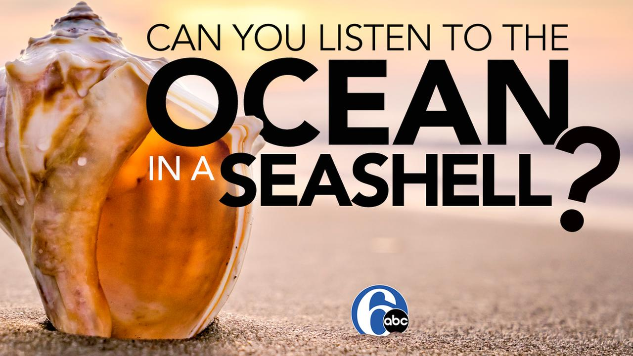 Can you listen to the ocean in a seashell? | 6abc Discovery