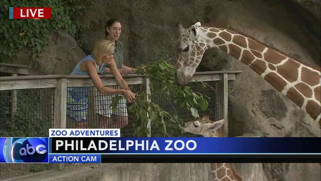 Cecily Tynan visits with the giraffes at the Philadelphia Zoo