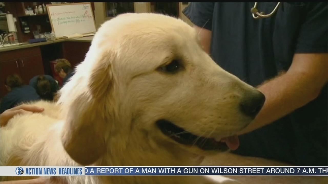 VIDEO: Choosing the right veterinarian for your pet