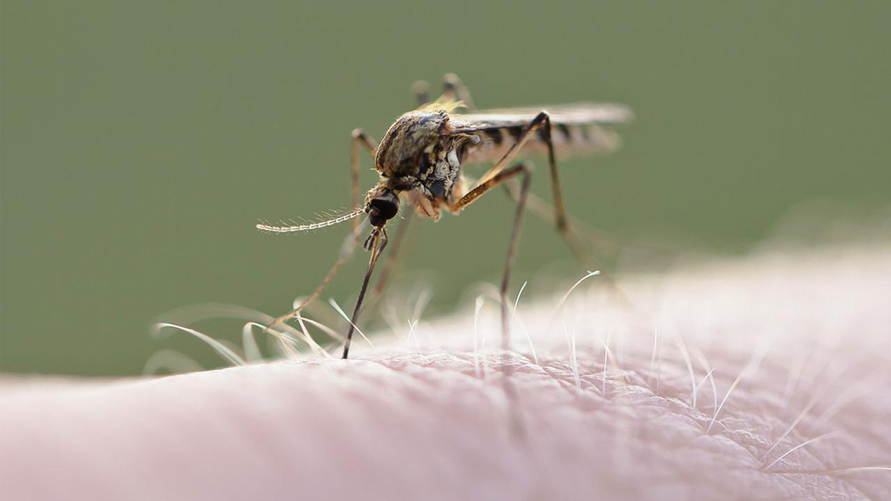 New Jersey health officials say a 62-year-old mans death last week was the states first confirmed fatality from West Nile virus this year.