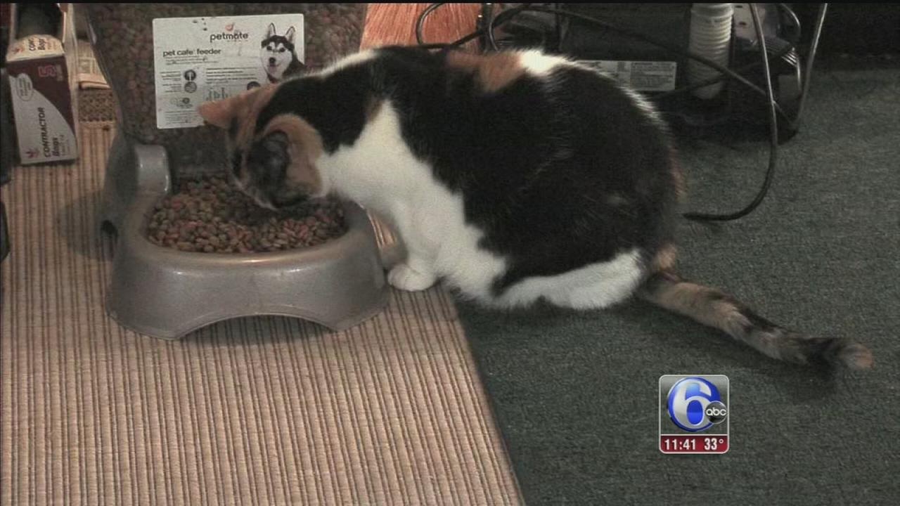 VIDEO: Cats living in rented room have to move
