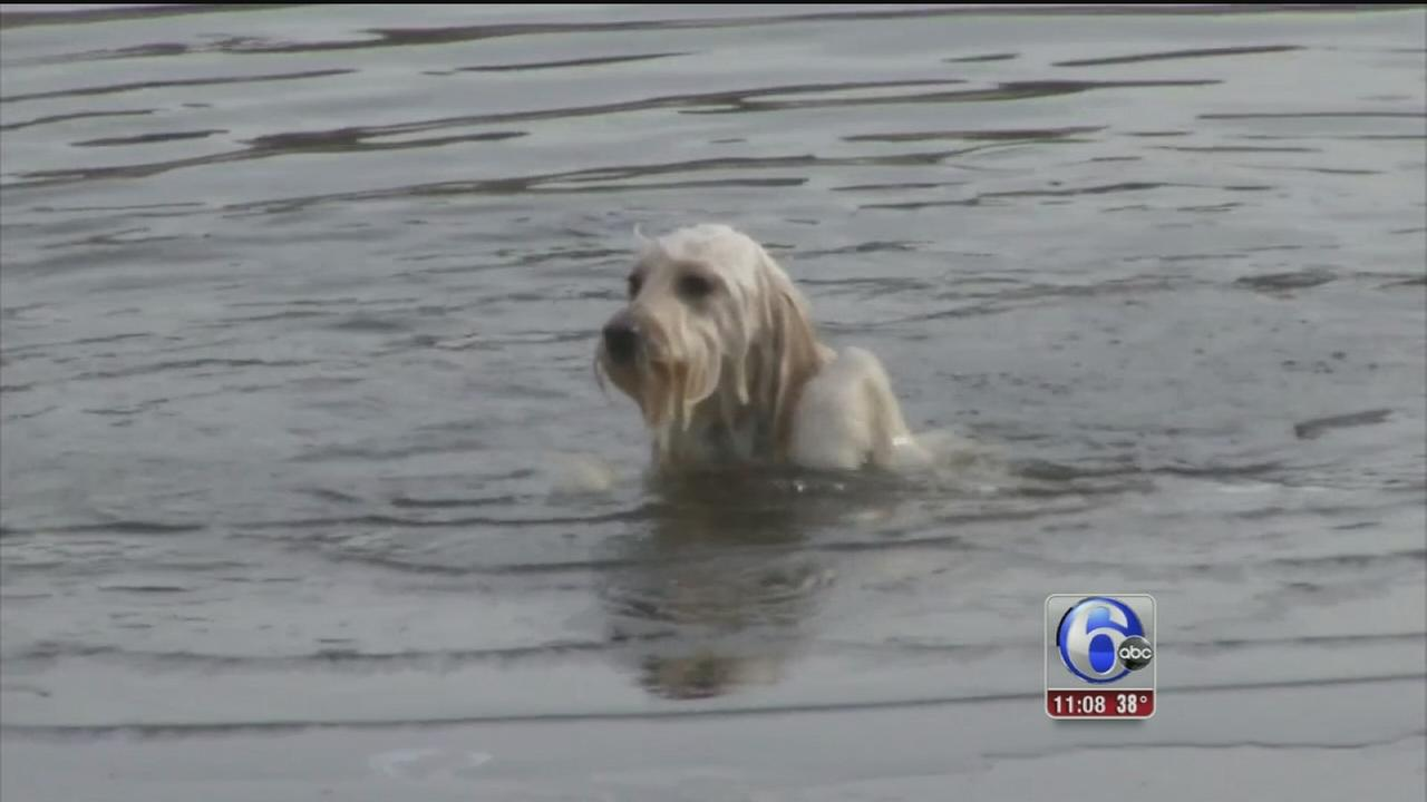 VIDEO: Dog rescued from icy pond in Wilmington