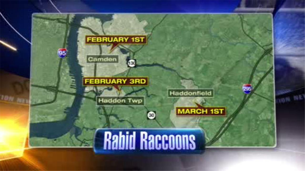 Another confirmed case of rabies in Camden County