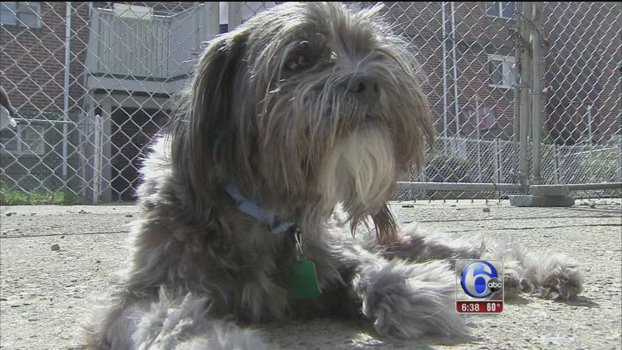 VIDEO: Strangers save dog struck in hit-and-run