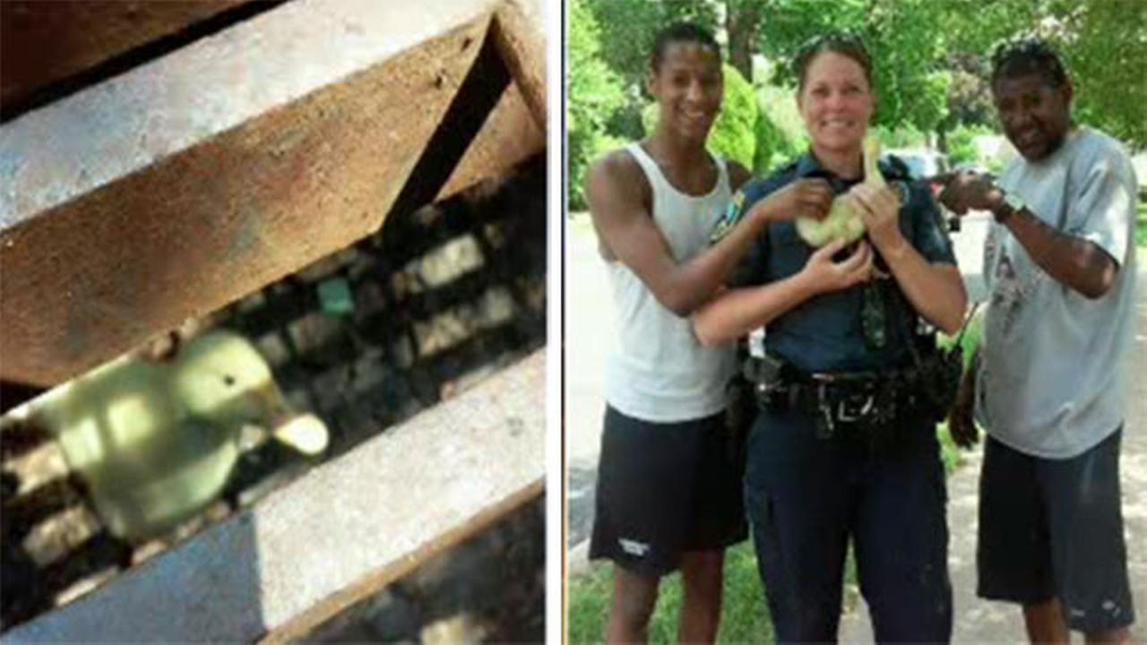 Officer, neighbors rescue duck stuck in sewer grate