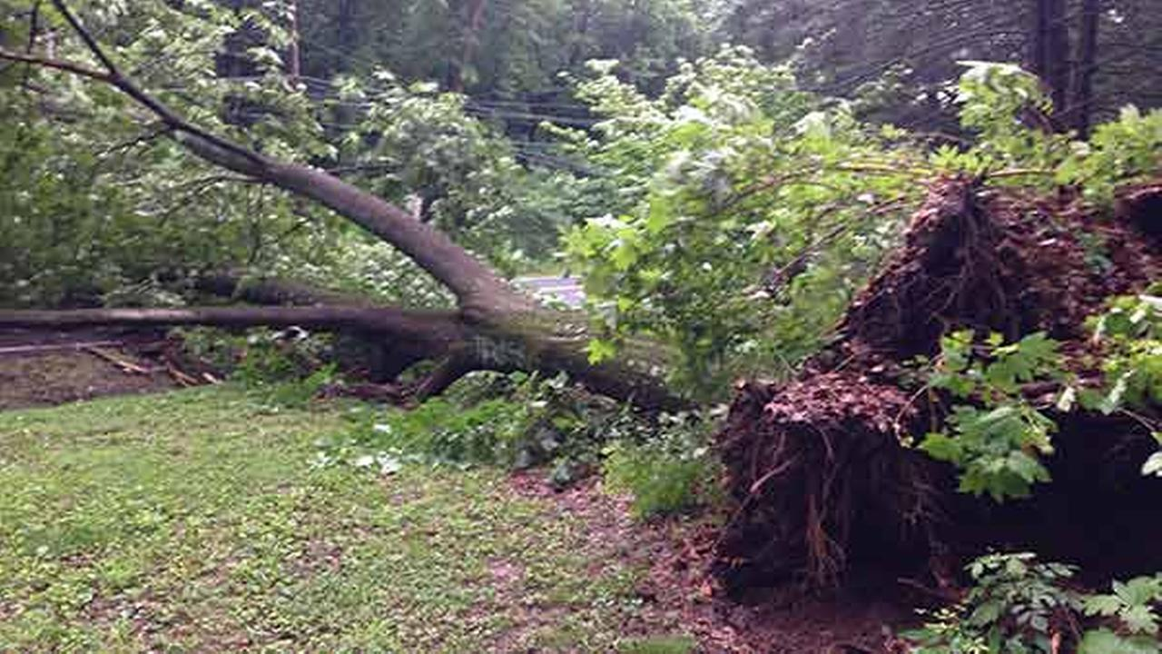Large tree falls, strikes utility pole in Talleyville, Del.