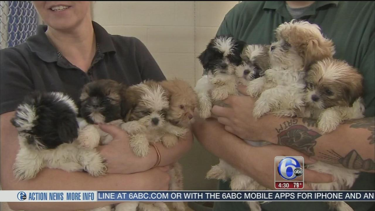 VIDEO: Van carrying puppies crashes on Pa. Turnpike