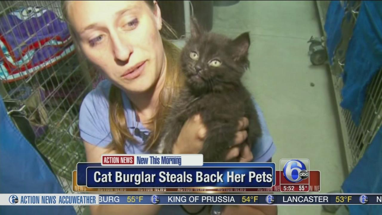 VIDEO: Cat hoarder steals back pets