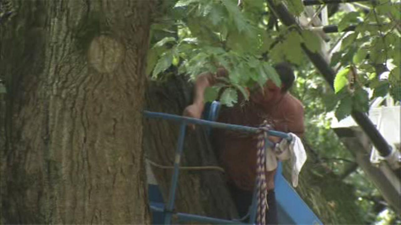 Man rescued after being trapped against tree