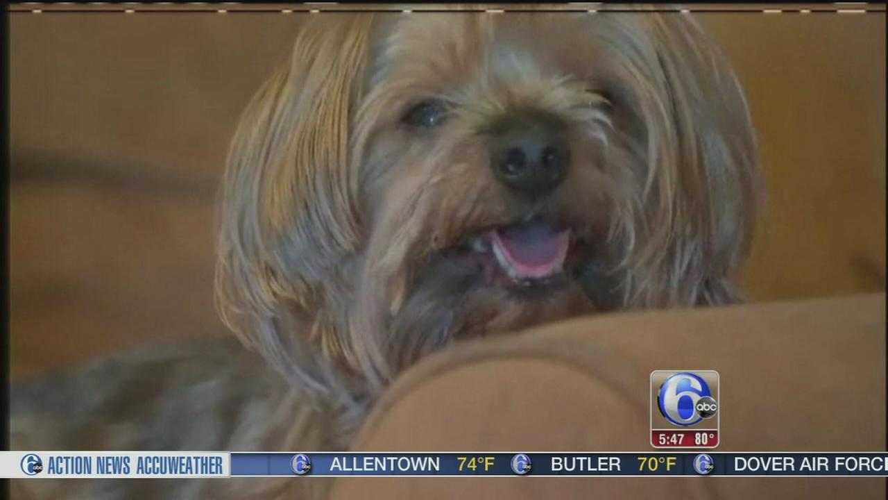 VIDEO: Stolen dog put up for sale online