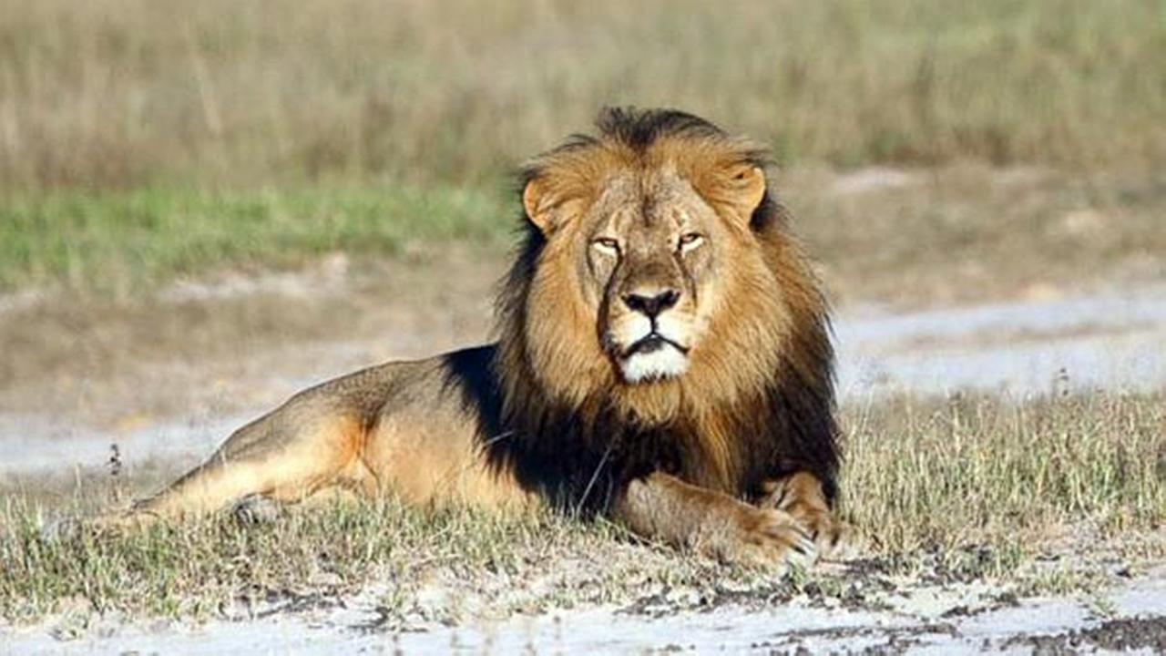 Lion researcher in Zimbabwe doubts report of Jericho killing
